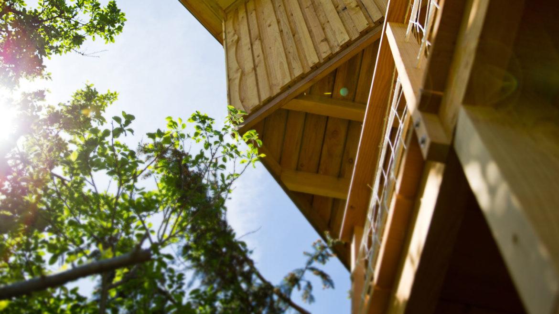 Constructeur de cabanes dans les arbres